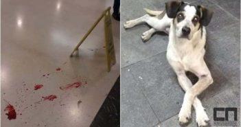 Ativistas divulgaram imagem de sangue do cachorro no chão do hipermercado após agressões