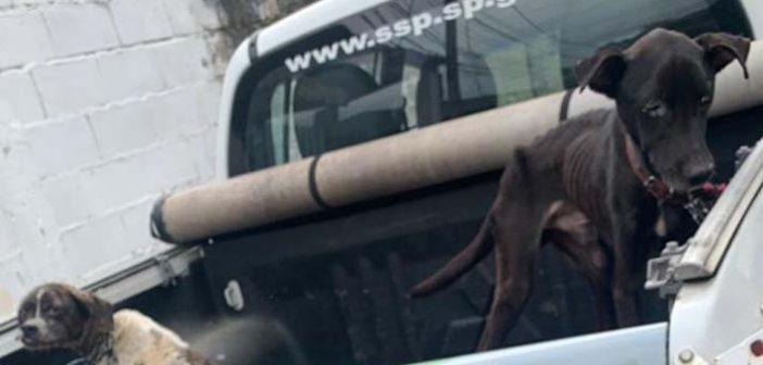 PM Ambiental prende homem por maus-tratos a dois cães em Ubatuba